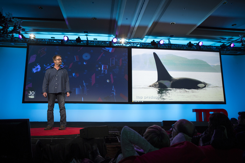 TED ACTIVE 2014